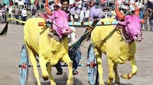 ಉತ್ತರ ಕರ್ನಾಟಕದ ಸಡಗರದ ಹಬ್ಬ ಕಾರಹುಣ್ಣಿಮೆ